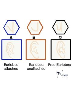 Trait earlobes types